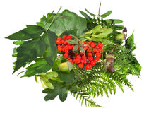 Green leaves, red seeds and acorns Stock Image