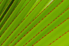 Abstract aloe leaves Royalty Free Stock Photos