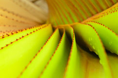 Abstract aloe leaves Stock Image