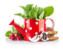 Green leaves in red watering can and tools for gardening Stock Photography