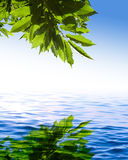 Green leaves reflected on the blue water Royalty Free Stock Photo