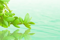 Green leaves reflecting Royalty Free Stock Photography