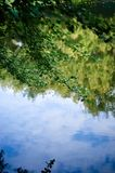 Green leaves reflecting in the water. royalty free stock photography