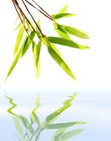 Green leaves in reflecton. Bamboo leaves isolated over white stock photos