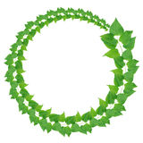 Green Leaves Ring Stock Images