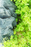 Green leaves and rock Stock Photos