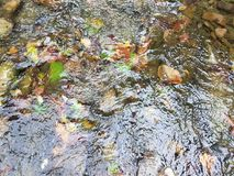Green leaves and rocks in a stream Royalty Free Stock Images