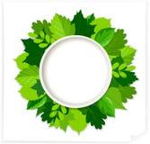 Green leaves round frame. Round frame made of various leaves Vector illustration vector illustration
