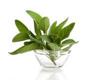 Green leaves of sage Stock Photo