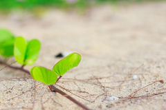 Green leaves on the sand Stock Photography
