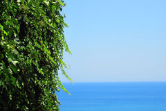 Green leaves and the sea Stock Photo