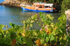 Green leaves sea view ship old boat float Royalty Free Stock Photography