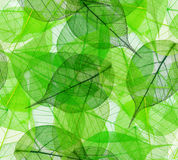 Green leaves seamless background Royalty Free Stock Images