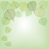 Green leaves, seamless Stock Photography