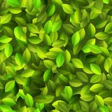 Green leaves Seamless pattern. + EPS10 Stock Photo