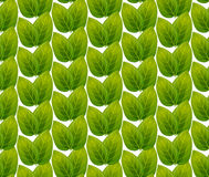 Green leaves seamless pattern vector Stock Image