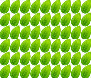 Green leaves seamless pattern vector background Stock Photos
