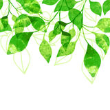 Green leaves seamless pattern. Vector illustration. Greeting car Stock Photo