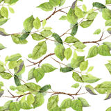 Green leaves. Seamless pattern. Watercolor Stock Image
