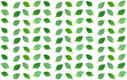 Green leaves  Seamless Royalty Free Stock Photos