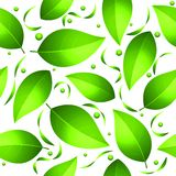 Green Leaves Seamless Pattern Stock Photography