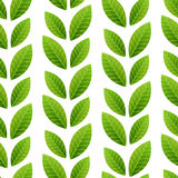 Green leaves seamless pattern Stock Image
