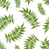 Green leaves seamless pattern for your design Stock Photo