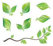 Green leaves set. Set of green fresh leaves and branch with water drops. Vector illustration stock illustration