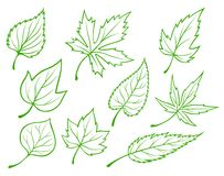 Green leaves set Royalty Free Stock Image