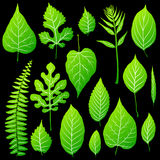 Green leaves set on black background. Vector Stock Photography