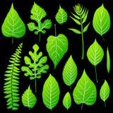 Green leaves set on black background. Vector stock illustration