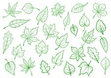 Green leaves set in outline style Stock Photos