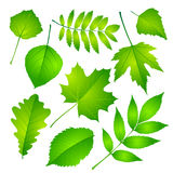 Green leaves set. Vector illustration Eps 10 Stock Photos