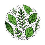Green leaves set royalty free illustration