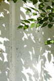 Green leaves shadows against a white wall making a decorative frame Stock Photos