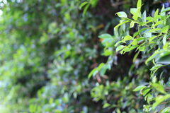 Green leaves with shallow depth Stock Photo