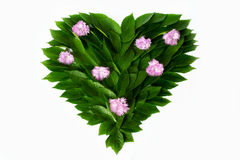 Green leaves in the shape of heart. Decorated with pink flowers. The concept of love of nature and protection of the environment.  Royalty Free Stock Photography