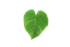 Green leaves shaped like heart. Stock Image