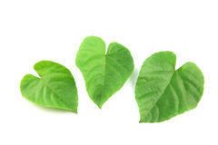 Green leaves shaped like heart. Stock Photo