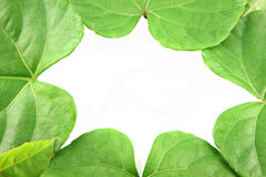 Green leaves shaped like heart. Stock Images