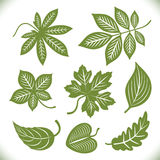 Green leaves shapes Stock Images