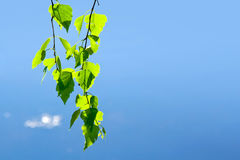 Green leaves and sky Royalty Free Stock Photos