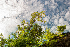 Green leaves and the sky Royalty Free Stock Photo