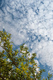 Green leaves and the sky Royalty Free Stock Photos