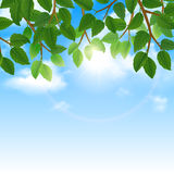 Green leaves and sky background border Stock Image