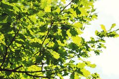 Green leaves on sky background. Stock Photos