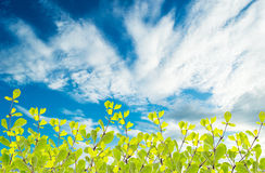 Green leaves on the sky background. Green leaves on the isolate sky background Royalty Free Stock Photos