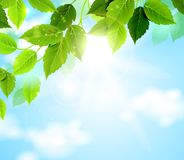 Green leaves with sky Royalty Free Stock Photography
