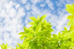 Green leaves with sky in sunny day Royalty Free Stock Photos
