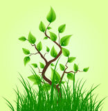 Green leaves on small tree. Natural elements background with grass and small tree with new leaves Stock Images